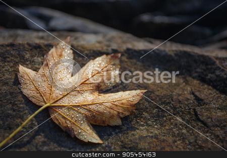 autumn maple leaves resting on a rock stock photo, grey autumn maple leaves resting on a rock by serkucher