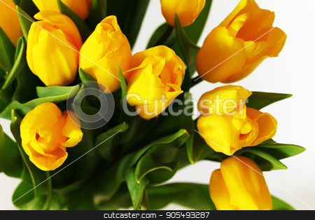 Yellow bouquet of tulips flowers stock photo, Yellow beautiful bouquet of tulips flowers isolated on white by Viktoryia