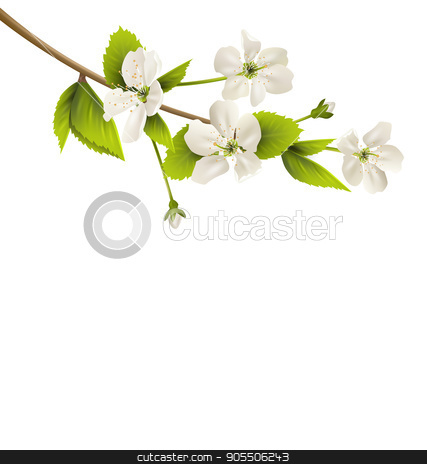 Cherry branch with white flowers isolated on white stock vector clipart, Cherry branch with white flowers isolated on white background by Makkuro_GL