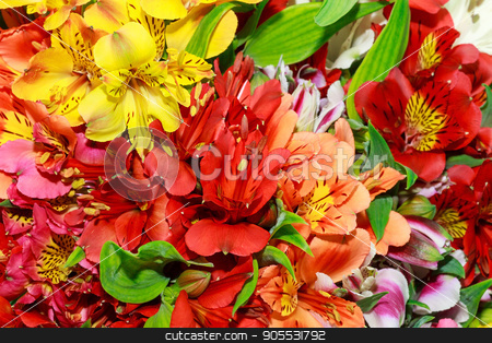 Alstroemeria flowers close-up stock photo, Beautiful bouquet of alstroemerias of different colors, close-up. by fogen