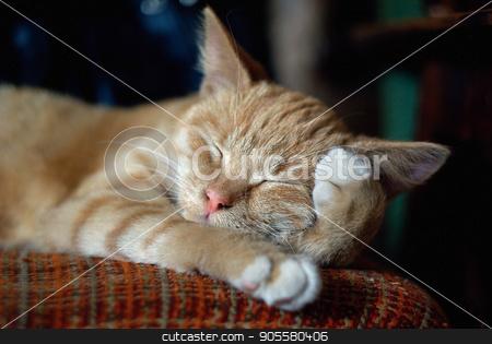 Sleeping ginger cat stock photo, Sleeping cute ginger tabby cat. Selective focus. by Veresovich