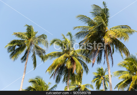 green palm trees ove blue sky stock photo, botany, nature, biology, eco and flora concept - green palm trees over blue sky by Syda Productions