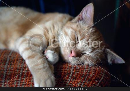 Sleeping tabby cat stock photo, Sleeping ginger tabby cat. Selective focus. by Veresovich