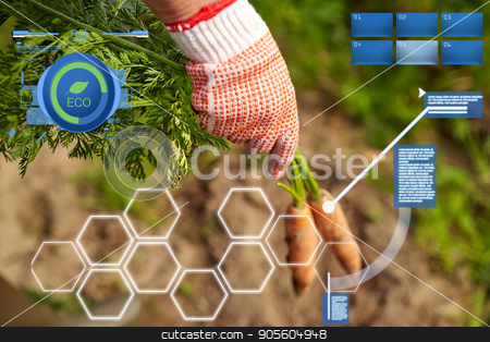 farmer hand in glove with carrots on farm stock photo, organic farming, agriculture, harvesting and people concept - farmer hand in glove with carrots on farm by Syda Productions