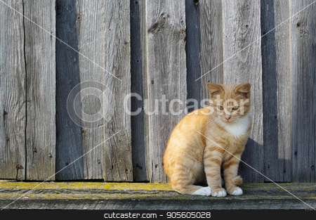 Ginger tabby cat stock photo, Ginger tabby cat sitting against the background of the wood fence. by Veresovich