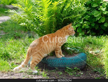 Cat and ferns stock photo, Ginger tabby cat cat plays in green ferns by Veresovich