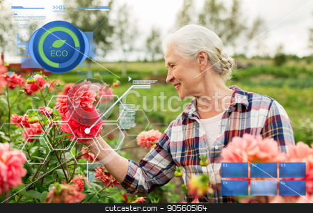 senior woman with flowers at summer garden stock photo, organic farming, agriculture and people concept - happy senior woman with flowers blooming at summer garden by Syda Productions