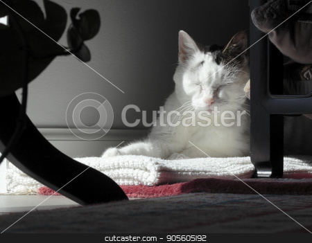 Kitty Cat Sleeping in a Quiet Corner stock photo, Female adult cat with eyes closed sleeping in a shady corner with front sunlight. Mostly white mature feline resting in a dark home corner with light on her face. by Lee Serenethos