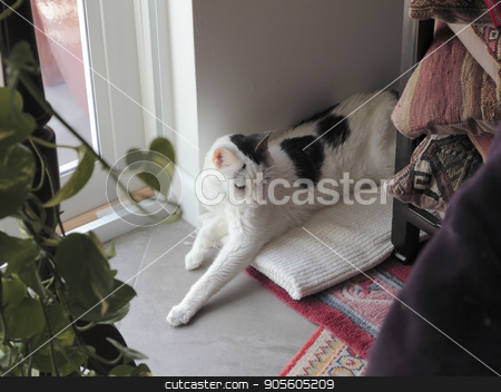 Female Cat Relaxing on a Home Floor  stock photo, White short hair cat with black markings resting with eyes open on a towel in a living room corner floor. Feline relaxing in a living room corner near a window. by Lee Serenethos