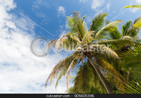 palm trees over blue sky stock photo, nature and summer concept - palm trees over blue sky by Syda Productions