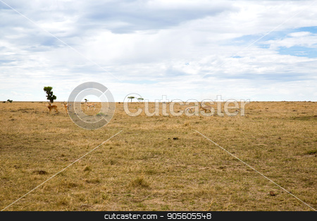 group of gazelles grazing in savannah at africa stock photo, animal, nature and wildlife concept - group of gazelles grazing in maasai mara national reserve savannah at africa by Syda Productions