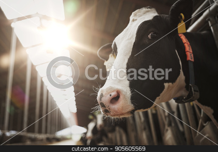 herd of cows in cowshed on dairy farm stock photo, agriculture industry, farming and animal husbandry concept - herd of cows in cowshed on dairy farm by Syda Productions