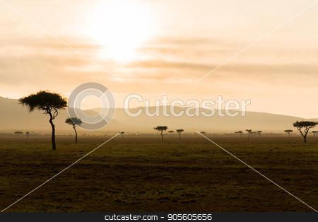 acacia trees in savannah at africa stock photo, nature, landscape and wildlife concept - acacia trees in maasai mara national reserve savannah at africa by Syda Productions