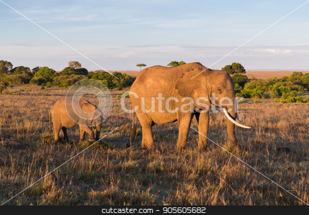 elephant with baby or calf in savannah at africa stock photo, animal, nature and wildlife concept - elephant with baby or calf walking in maasai mara national reserve savannah at africa by Syda Productions