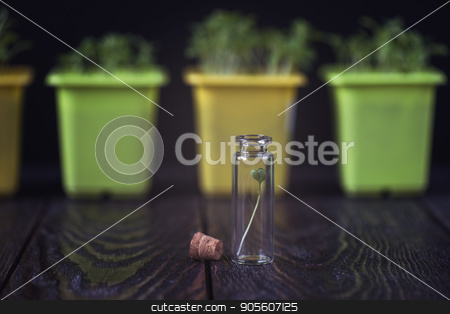 Rukkola plant in a test-tube stock photo, Rukkola plant in a test-tube, plant cultivation. Biotechnology of the future by olinchuk