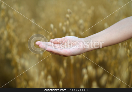 child holding open palm  stock photo, close up view of child holding open palm against field of ripe wheat by Ruslan Huzau