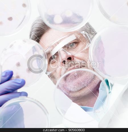 Senior life science researcher grafting bacteria. stock photo, Focused senior life science professional grafting bacteria in the pettri dishes. Lens focus on researcher. by kasto