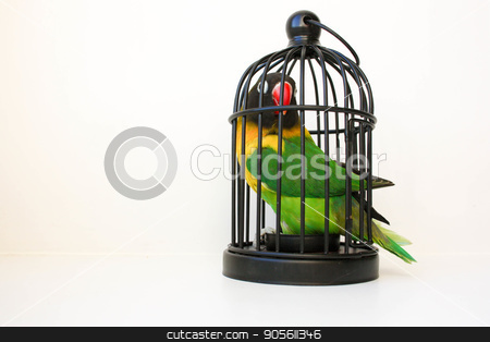 Credit concept. A parrot in a cage. on a white stock photo, Credit concept. A parrot in a cage. on a white background. Photo for your design by Kseniia