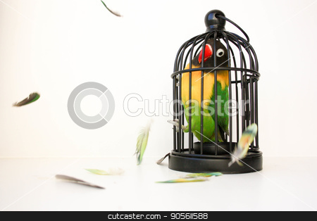 Fear of a closed space concept. A bird stock photo, Fear of a closed space concept. A bird in a cage and feathers. a parrot. on a white background. Photo for your design by Kseniia