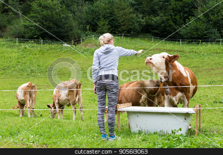 Active sporty female hiker observing and caressing pasturing cows on meadow. stock photo, Active female hiker wearing sporty clothes observing and caressing pasturing cows on mountain meadow, Gorenjska region, Alps, Slovenia. by kasto