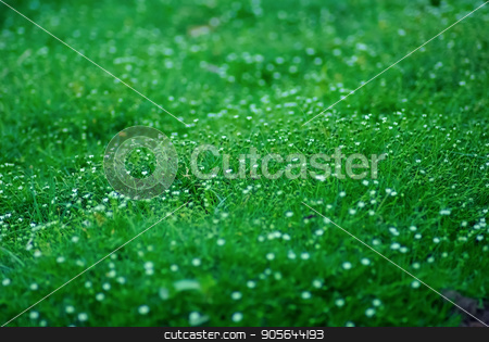 Green grass stock photo, Shallow depth of field. Selective focus. by Veresovich