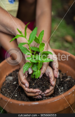 Cropped hands of girl and grandmother planting seedling in pot stock photo, Cropped hands of girl and grandmother planting seedling in pot at backyard by Wavebreak Media