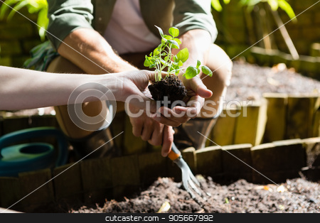Couple planting young plant into the soil stock photo, Mid section of couple planting young plant into the soil in garden by Wavebreak Media