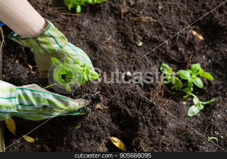 Hand of person gardening in the garden