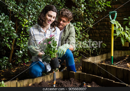 Couple holding sapling plant in garden stock photo, Smiling couple holding sapling plant in garden by Wavebreak Media
