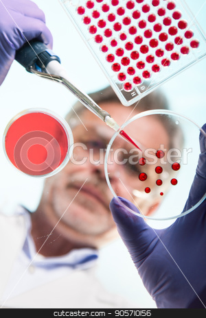 Senior life science researcher grafting bacteria. stock photo, Focused senior life science professional grafting bacteria in the pettri dishes. Lens focus on the agar plate. Through the glass view. by kasto