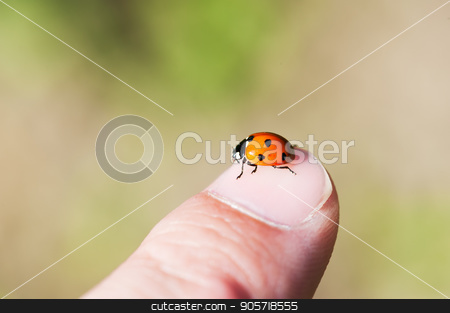 Ladybug on a finger stock photo, Ladybug on a finger with a green background by LP2Studio