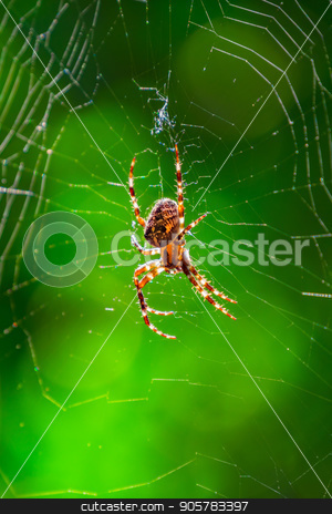Spider on spider web with green background stock photo, Spider on spider web with green background. Closeup of a brown spider isolated on green background. Spider close-up on a green background. by Sid10
