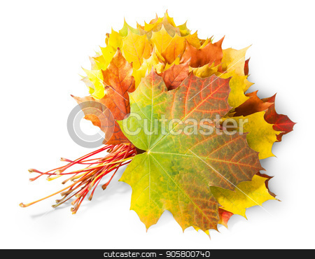 Bouquet Of Autumn Leaves stock photo, Bouquet Of Autumn Leaves Isolated On White Background by Vitalii Borovyk