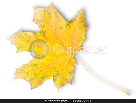 Yellow Autumn Maple Leaf With Green Spots stock photo, Yellow Autumn Maple Leaf With Green Spots Isolated On White Background by Vitalii Borovyk