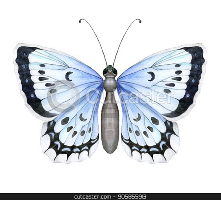 Colorful realistic butterfly isolated on white background. Top view. stock vector clipart, Colorful realistic butterfly isolated on white background. Top view. Art vector illustration. by verock