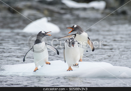 Gentoo Penguins on the ice stock photo, Gentoo Penguins playn on the ice Cuvervile Island, Antarctica by Vladimir Seliverstov