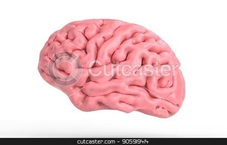 3d illustration of the human brain isolated in white 3d illustration stock photo, 3d illustration of the human brain isolated in white 3d render by Eugene Zabugin