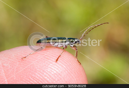 Small bug sitting on a finger stock photo, Small bug sitting on a finger, selective focus by michaklootwijk
