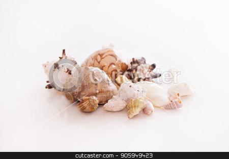 shells on a white background. Isolated photo