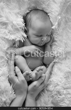 Portrait of newborn baby in the hands of parents stock photo, Portrait of newborn baby in the hands of parents by aaalll3110