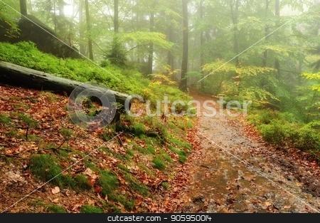Autumn beautifully colored forest stock photo, A beautiful and colorful autumn forest covering the rain by Ondrej Vladyka