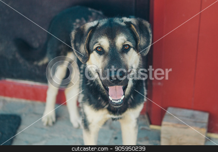 Portrait of a dog with hanging ears stock photo, Portrait of a dog with hanging ears by aaalll3110