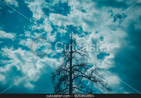 tree against blue sky and white clouds stock photo, tree against blue sky and white clouds by aaalll3110