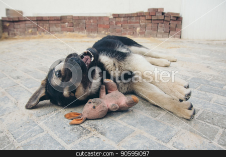 Puppy playing with a rabbit on the floor. Dog breed shepherd dog lying with his mouth open on a brick floor, lying next to a dirty pink plush Bunny stock photo, Puppy playing with a rabbit on the floor. Dog breed shepherd dog lying with his mouth open on a brick floor, lying next to a dirty pink plush Bunny by aaalll3110