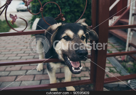 Dog face close-up. Portrait of a shepherd with hanging ears stock photo, Dog face close-up. Portrait of a shepherd with hanging ears by aaalll3110