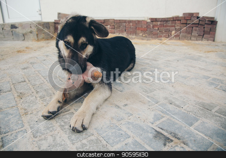 Puppy plays with a rabbit on the floor. Dog breed shepherd holds the teeth in a dirty pink stuffed Rabbit stock photo, Puppy plays with a rabbit on the floor. Dog breed shepherd holds the teeth in a dirty pink stuffed Rabbit by aaalll3110