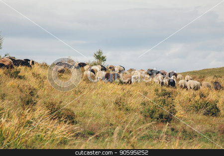 cattle grazing in the meadow. Pets: cows, goats, sheep stock photo, cattle grazing in the meadow. Pets: cows, goats, sheep by aaalll3110