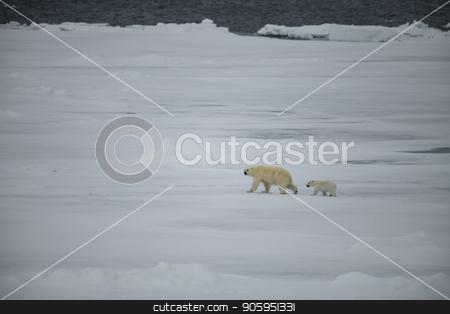 Polar bear walking in an arctic. stock photo, Polar bear with cub walking in an arctic landscape. by Vladimir Seliverstov