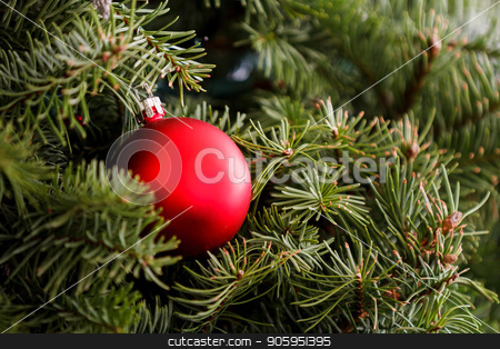 Christmas ornament is on the treet stock photo, Single ornament supported by a christmas tree. by txking