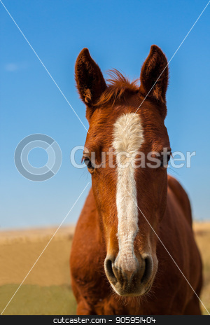 Head shot of a horse stock photo, A horse up against a green/brown background with a nice vibrant summer sky. by txking